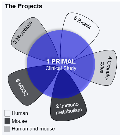 PRIMAL Projects